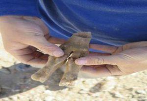 Read more about the article פתיחת תערוכה: חכמת העצמות העתיקות, המחקר הארכאו-זואולוגי