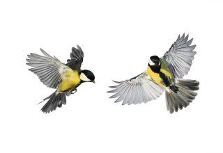 Read more about the article ההתחממות הגלובלית גורמת לציפורים הצעירות להחליף יותר נוצות