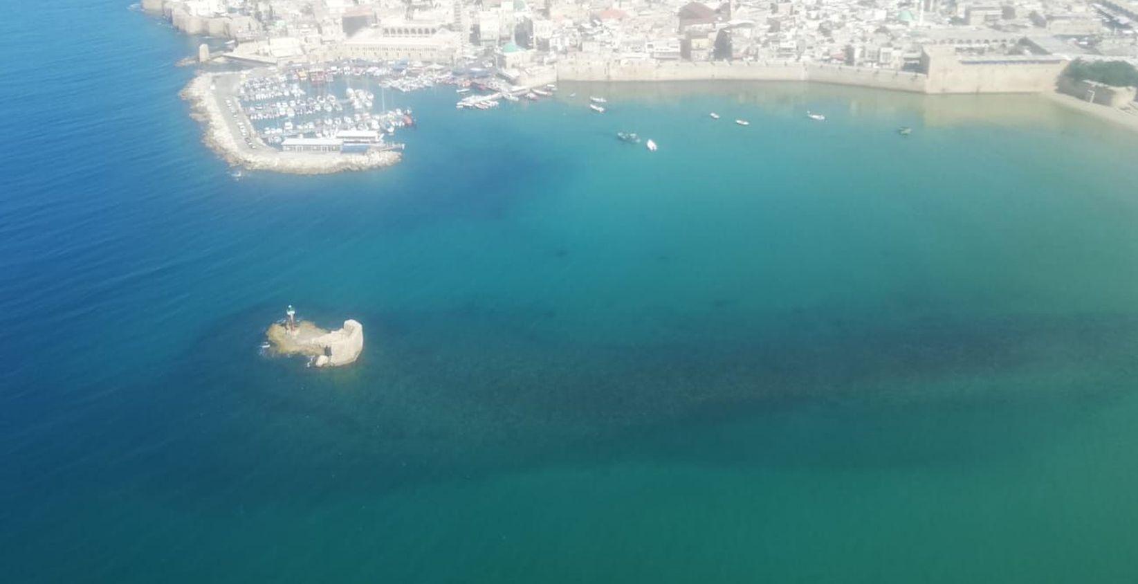 בים, באוויר ובצלילה: עוקבים אחרי המדוזות