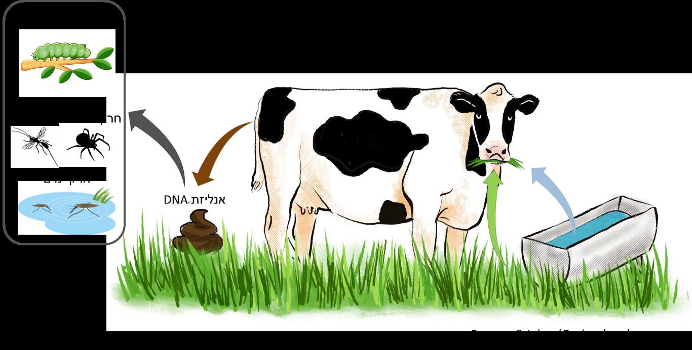 Read more about the article יונקים אוכלי עשב טורפים במהלך הרעייה שרשרת מזון מורכבת של חרקים